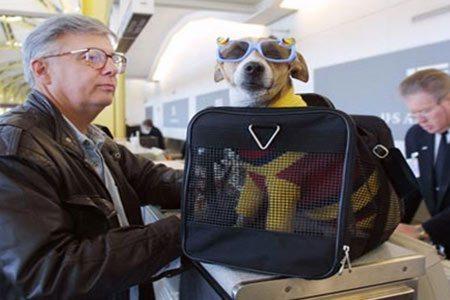 Viajar con mascotas